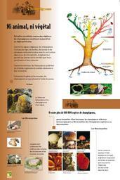 Champignons (Les) | COMVV