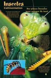 Insectes (Les) | Citadelles